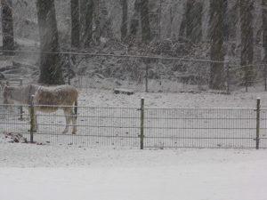 Winter door Roland_04Lweb