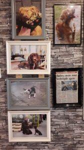 bezoek hondenfokkerij foto overzicht