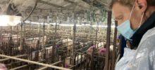 Met het werkgebied dieren op bezoek bij varkensboerderij De Heide